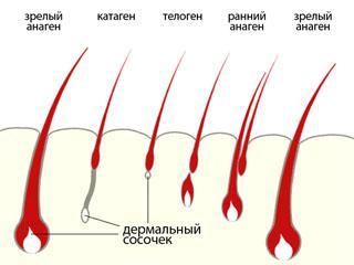 Какой выпрямляющий бальзам для волос лучше выбрать? – обзор брендов, виды, особенности, эффективность, цена, отзывы, фото до и после